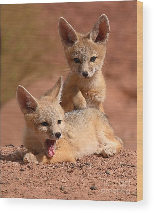 Fox Wood Print featuring the photograph Kit Fox Twin Pups by Max Allen
