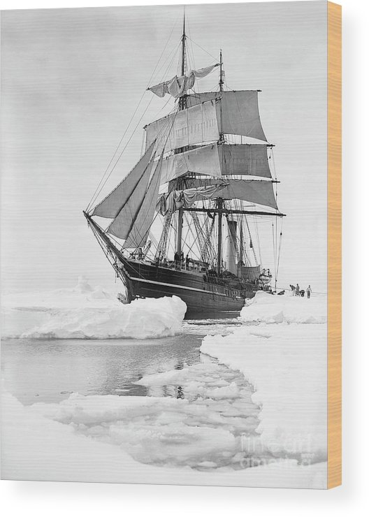 1900s Wood Print featuring the photograph Terra Nova in Antarctic pack ice, 1910 by Scott Polar Research Institute