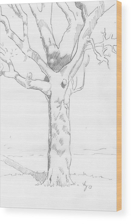 Tree Wood Print featuring the drawing Tree Sketch by Mike Jory