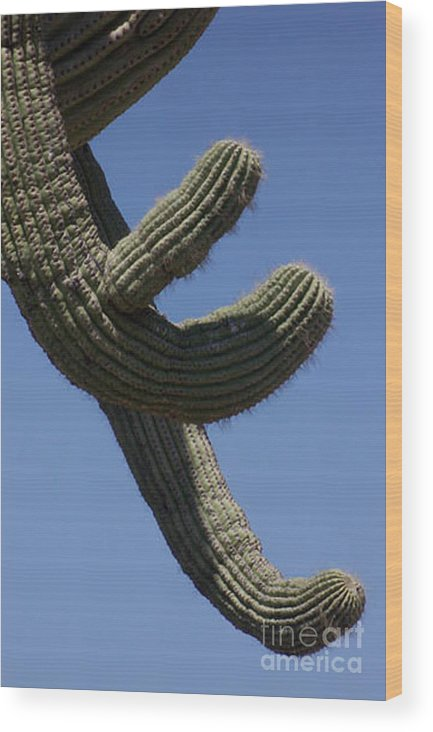 Saguaro Wood Print featuring the photograph Come Hither by Kathy McClure