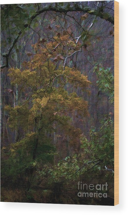 Forest Wood Print featuring the photograph Primeval By James Figielski by Paulinskill River Photography
