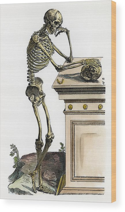 1543 Wood Print featuring the photograph Vesalius: Skeleton, 1543 by Granger