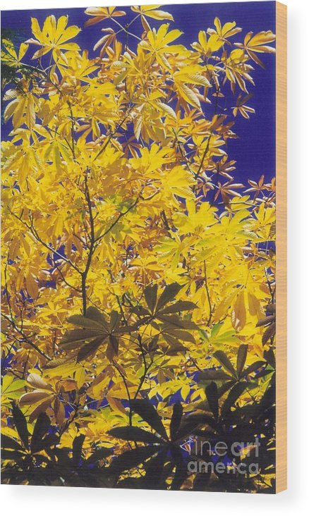 Yellow Wood Print featuring the photograph True Blue by Bruce Borthwick