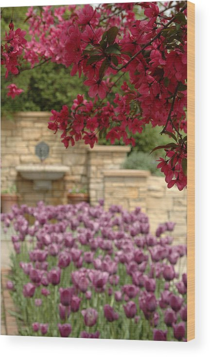 Tulips Wood Print featuring the photograph Untitled by Kathy Schumann