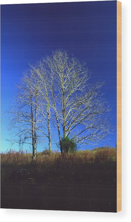 Landscape Wood Print featuring the photograph Blue Tree In Tennessee by Randy Oberg