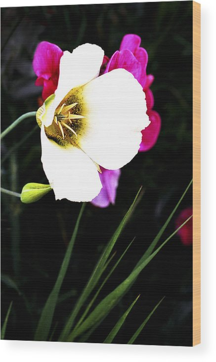 Wildflower Wood Print featuring the photograph Colorado Wildflower1 by Marilyn Hunt