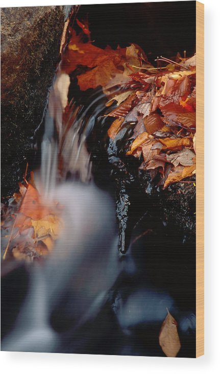 Wood Print featuring the photograph Falls Foliage by Jim DeLillo