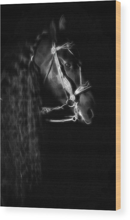 Friesians Wood Print featuring the photograph Freisian Shadow by Athena Mckinzie