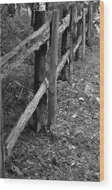 Ansel Adams Wood Print featuring the photograph Momvisitfence-carterlane by Curtis J Neeley Jr