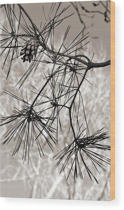 Tree Wood Print featuring the photograph Needles Everywhere by Marilyn Hunt