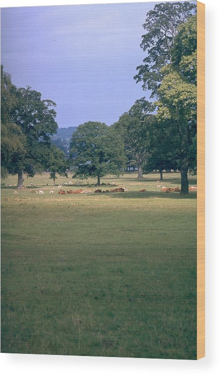 Great Britain Wood Print featuring the photograph Pasture by Flavia Westerwelle