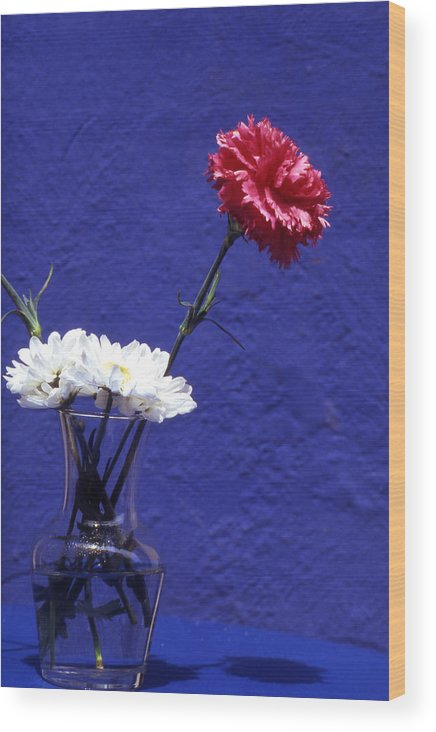 Blue; Bloom; Beauty In Nature; Botany; Carnation; Close-up; Close; Up; Crete; Color; Wood Print featuring the photograph Red Carnation by Steve Outram