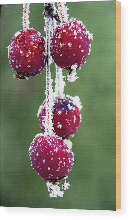 Berries Wood Print featuring the photograph Seasonal Colors by Marilyn Hunt