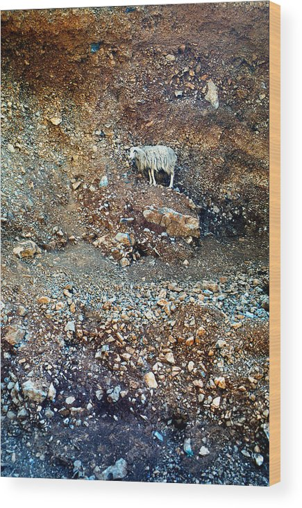 Lehtokukka Wood Print featuring the photograph Sheep by Jouko Lehto