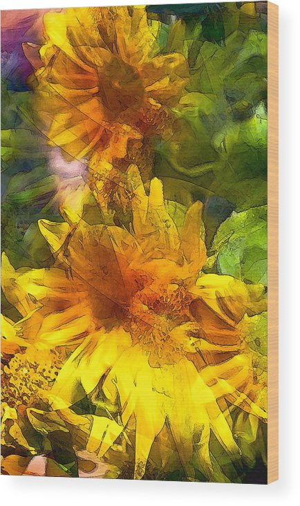 Floral Wood Print featuring the photograph Sunflower 6 by Pamela Cooper