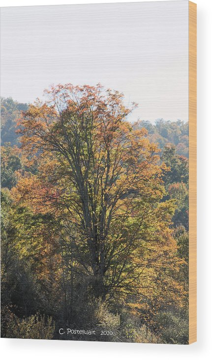 Trees Wood Print featuring the photograph Sunlight On Autumn Foliage by Carolyn Postelwait