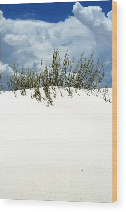 Sand Wood Print featuring the photograph White Sand Green Grass Blue Sky by Joe Kozlowski