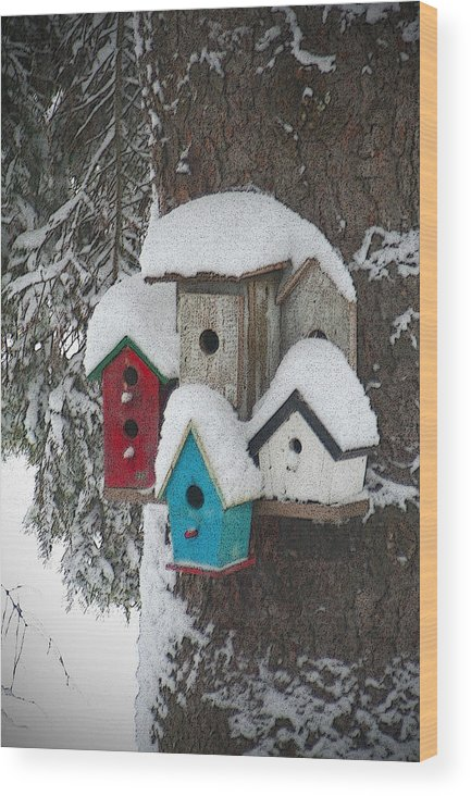Winter Wood Print featuring the photograph Winter Birdhouses by Tim Nyberg