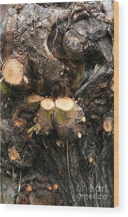 Trees Wood Print featuring the photograph Winter Tree Close Up by Valia Bradshaw