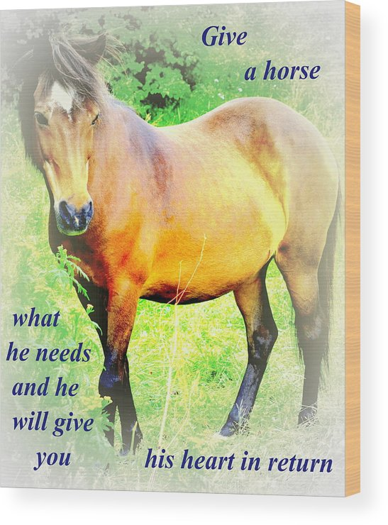 Wrestle Wood Print featuring the photograph Care About A Horse And He Will Give You His Heart In Return by Hilde Widerberg