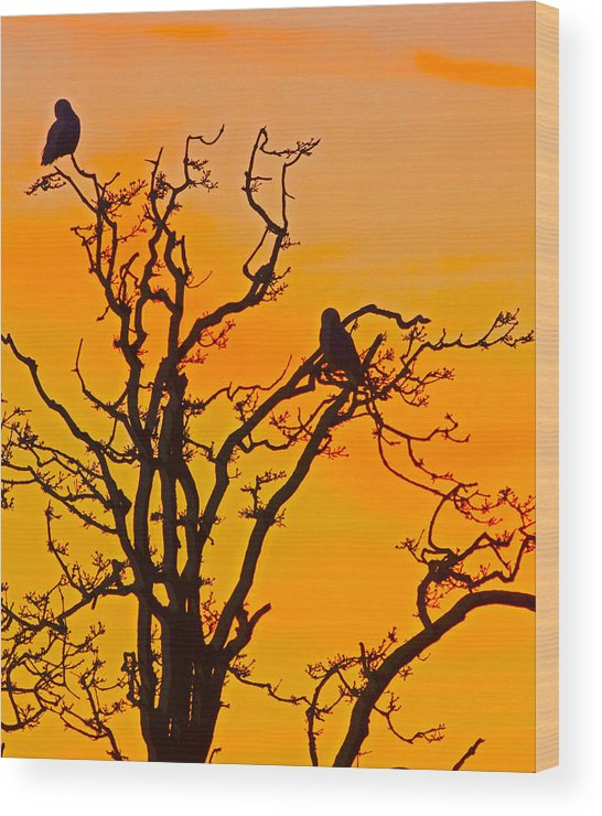 Snow Owl Wood Print featuring the photograph Snow Owl Silhouette by Rob Mclean