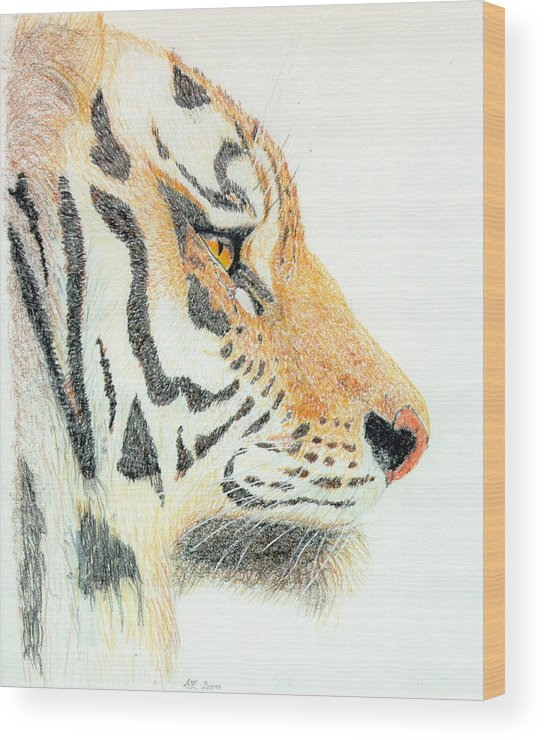 Tiger Wood Print featuring the drawing Tiger's Head by Stephanie Grant