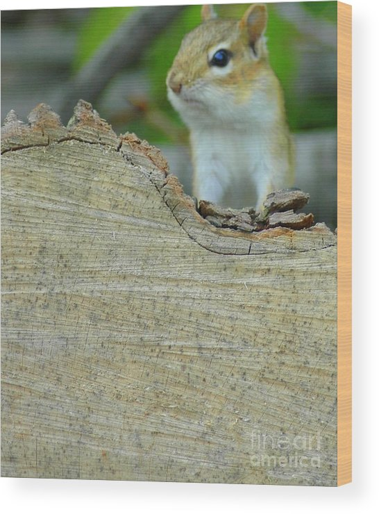 Chipmunk Wood Print featuring the photograph What's Up by Kathleen Struckle