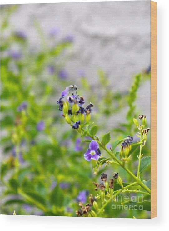 Fly Wood Print featuring the photograph Fly On Flower by Pamela Walrath