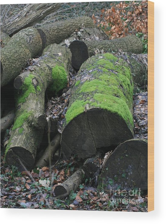 Trees Wood Print featuring the photograph Winter Log Mossy Patterns by Valia Bradshaw