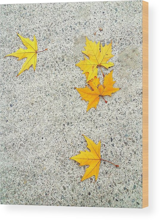 Leaves.autumn.outdoors.ground.fall.yellow.rest. Die.beauty.city. Wood Print featuring the photograph Fallen Leaves by Nato Lobzhanidze