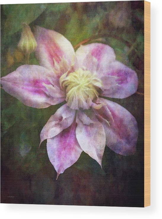 Impressionist Wood Print featuring the photograph Frilled Clematis 1201 Idp_2 by Steven Ward
