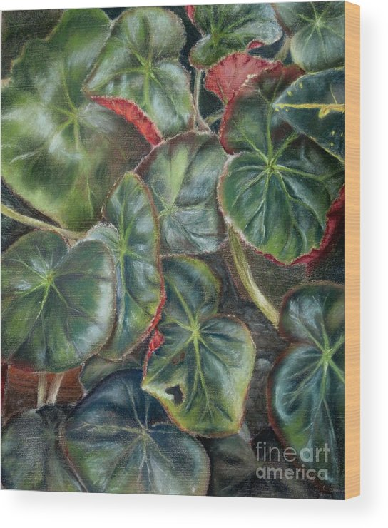 Begonias Wood Print featuring the drawing Laura's Begonia by Karen Boudreaux