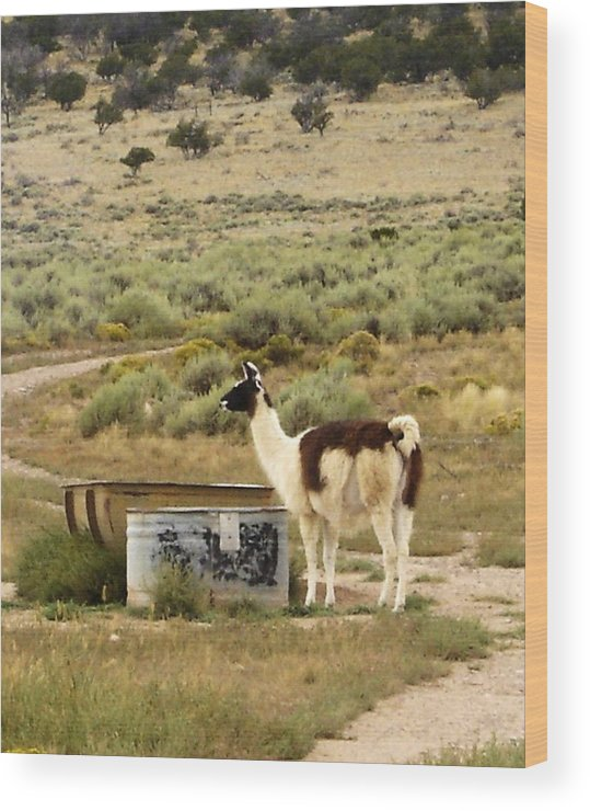 Llama Wood Print featuring the photograph Llama Land by Mary Rogers