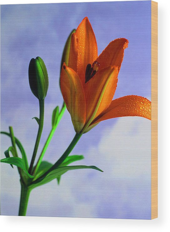 Flower Wood Print featuring the photograph Morning Bloom by Dennis Hammer