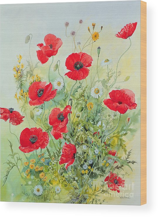 Flowers; Botanical; Flower; Poppies; Mayweed; Leaf; Leafs; Leafy; Flower; Red Flower; White Flower; Yellow Flower; Poppie; Mayweeds Wood Print featuring the painting Poppies And Mayweed by John Gubbins