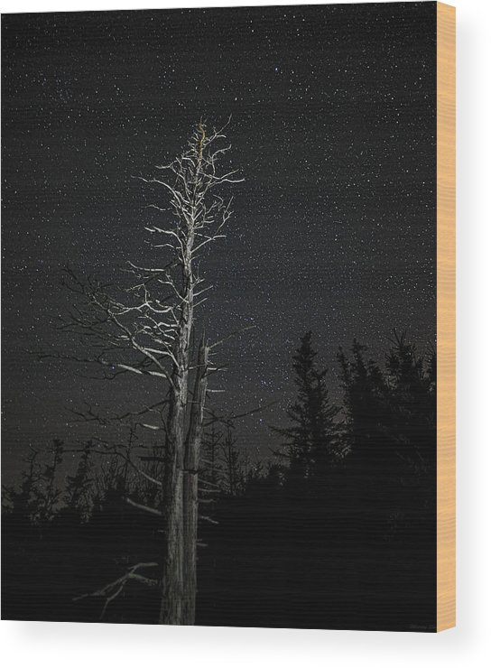 Skeletal Tree Starscape Wood Print featuring the photograph Skeletal Tree Starscape by Marty Saccone