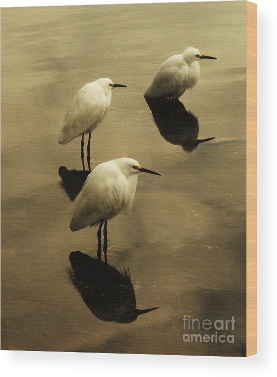 Egrets Wood Print featuring the photograph Still by Daniele Smith