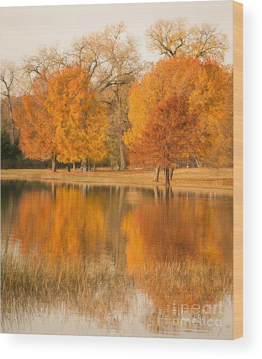 Nature Wood Print featuring the photograph Two Orange Trees by Iris Greenwell