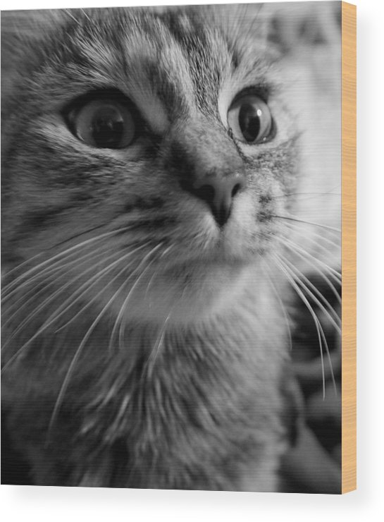Cat Wood Print featuring the photograph Whered Ya Get Those Peepers by Lori Pessin Lafargue