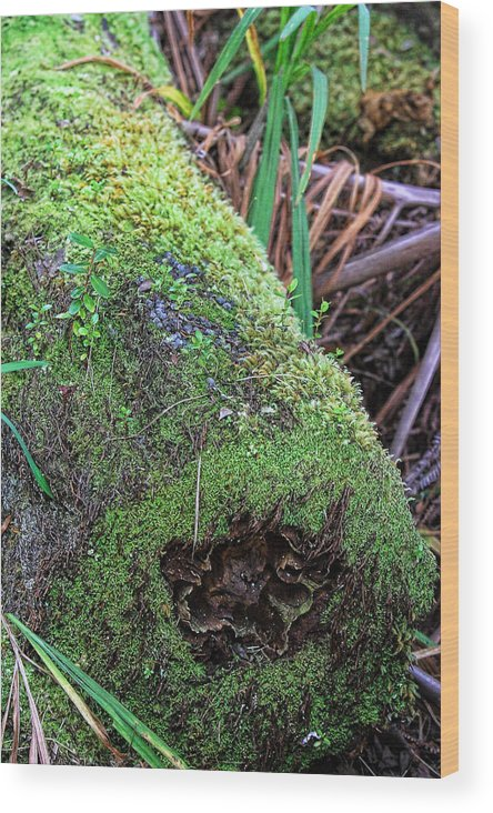 Nature Wood Print featuring the photograph Mossy Dead Log by Linda Phelps