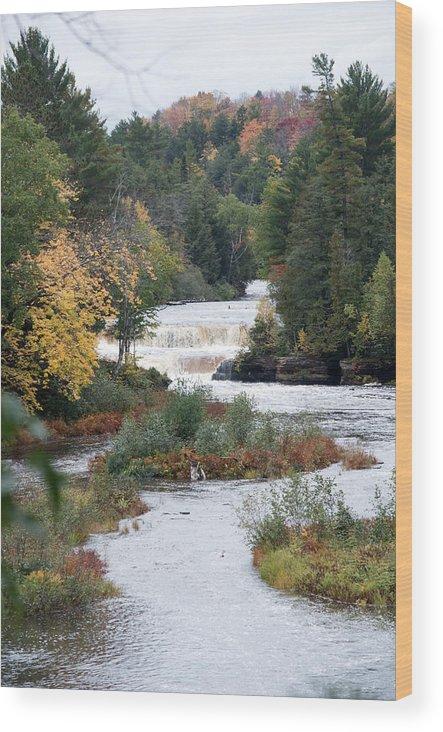 Lower Tahquamenon Falls Wood Print featuring the photograph Falls by Linda Kerkau