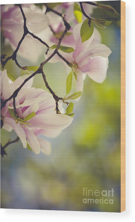 Magnolia Wood Print featuring the photograph Magnolia Flowers by Nailia Schwarz
