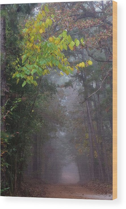 Trees Wood Print featuring the photograph Roads 16 by Lawrence Hess