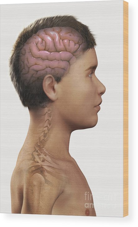 Pediatric Anatomy Wood Print featuring the photograph The Brain Child by Science Picture Co