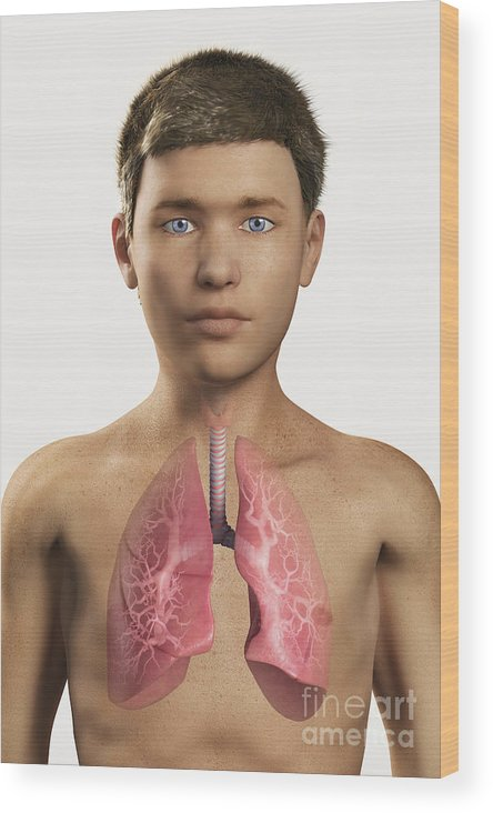3d Visualisation Wood Print featuring the photograph The Lungs Within The Body Pre-adolescent by Science Picture Co