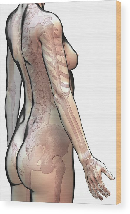 Digitally Generated Image Wood Print featuring the photograph Bones Of The Upper Body Female by Science Picture Co