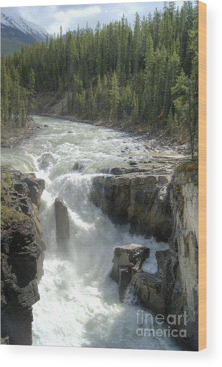 Sunwapta Falls Wood Print featuring the photograph Sunwapta Falls by David Birchall