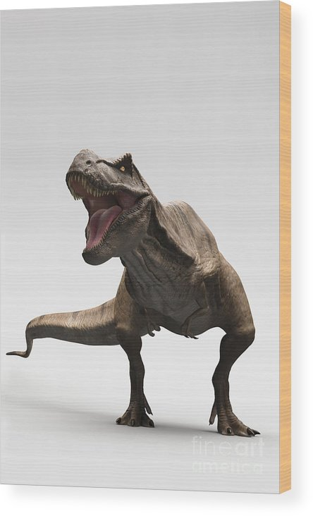Digitally Generated Image Wood Print featuring the photograph Dinosaur Tyrannosaurus by Science Picture Co