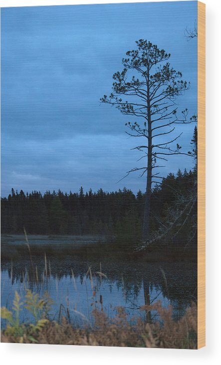 Nature Wood Print featuring the photograph Blue by Linda Kerkau