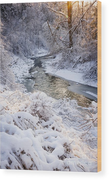 Winter Wood Print featuring the photograph Forest Creek After Winter Storm by Elena Elisseeva